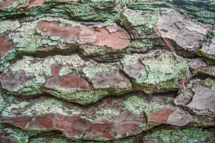 Bark close-up - Arab, Alabama, USA